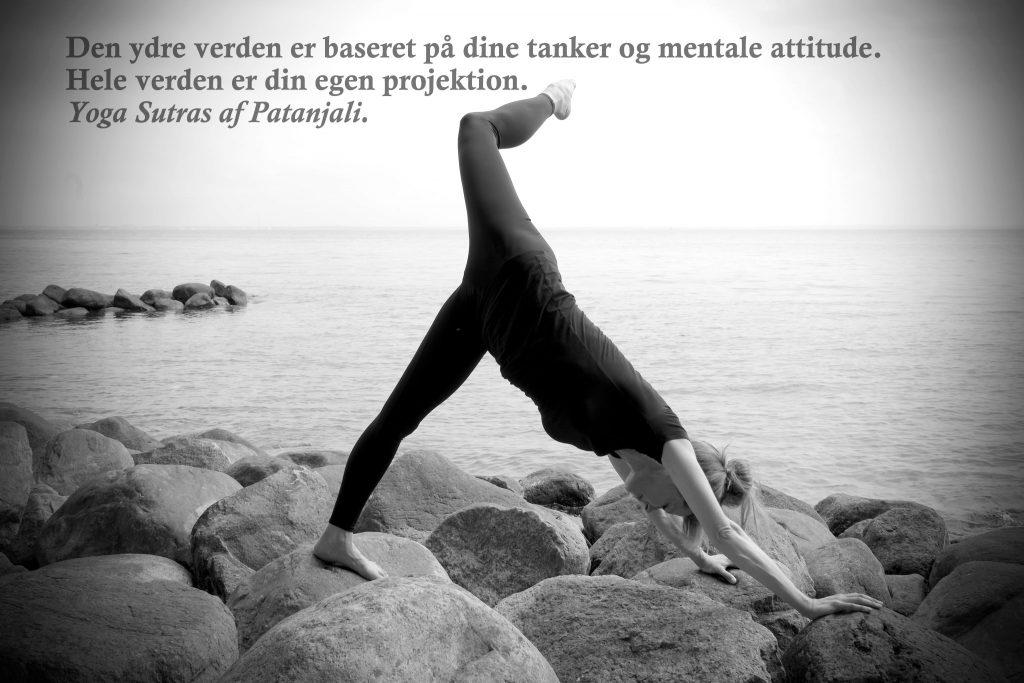 Hatha yoga stilling: Eka Pada Adho Mukha Svanasana (etbenet hund med hoved ned) ved yogalærer Lotte Voetmann Stevns-Hatha yoga